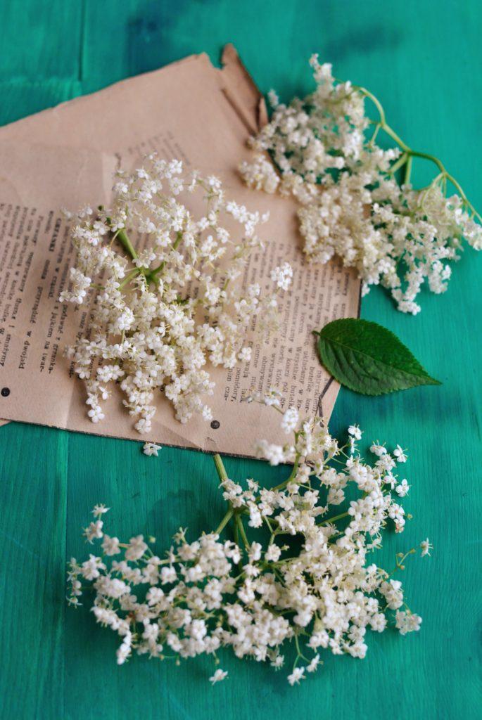 DSC_7662-685x1024 Syrop z kwiatów czarnego bzu